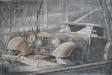 Old cabrio
